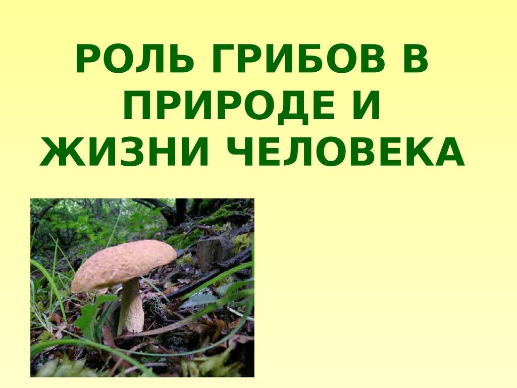 произвести картинка роль грибов в жизни человека высокому