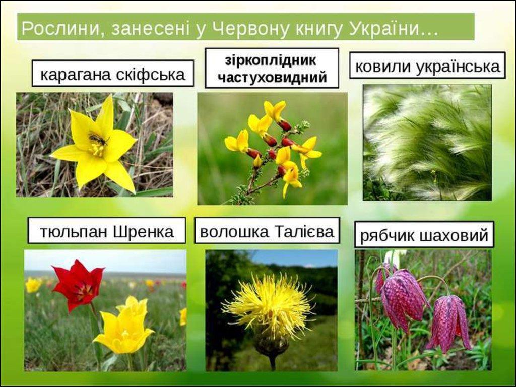 Презентація про иллюстрации книги україни тварини та рослини червоної