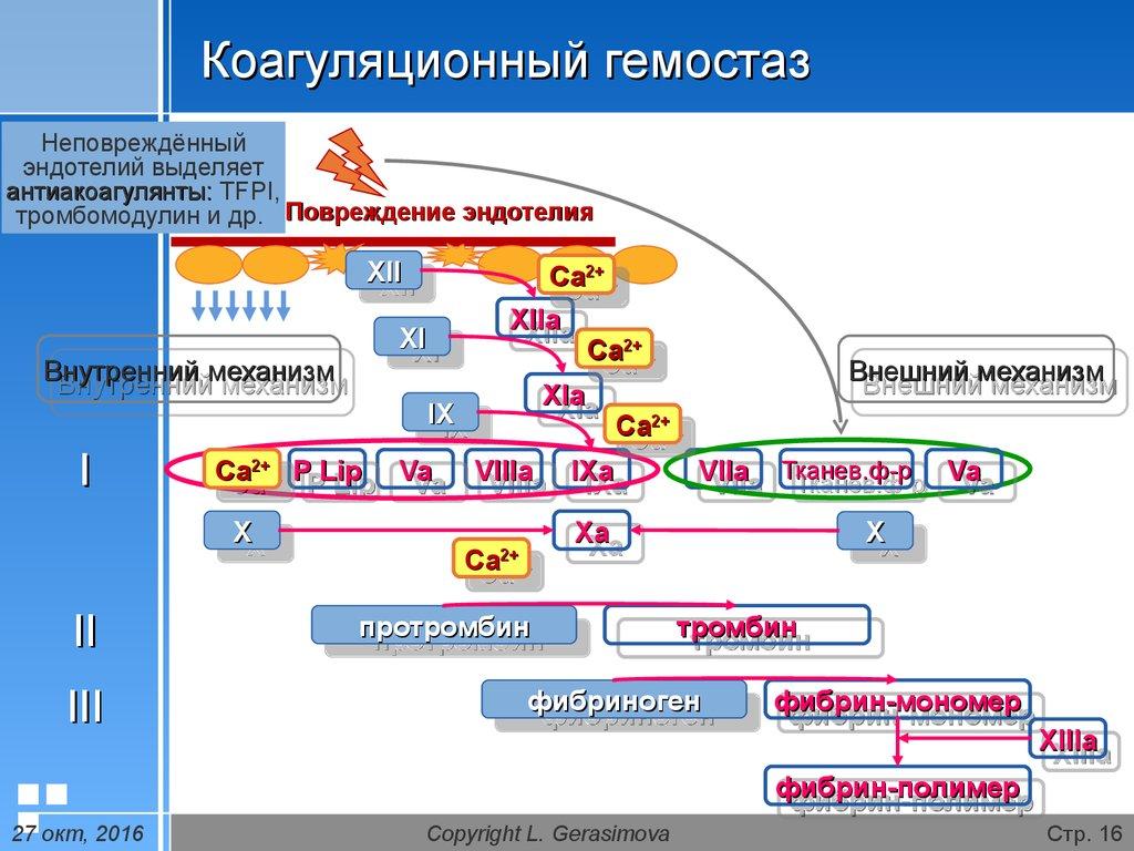 система гемостаза картинка металлических