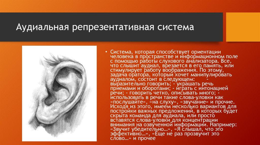 картинки по репрезентативным системам человека не относится по нлп предоставил