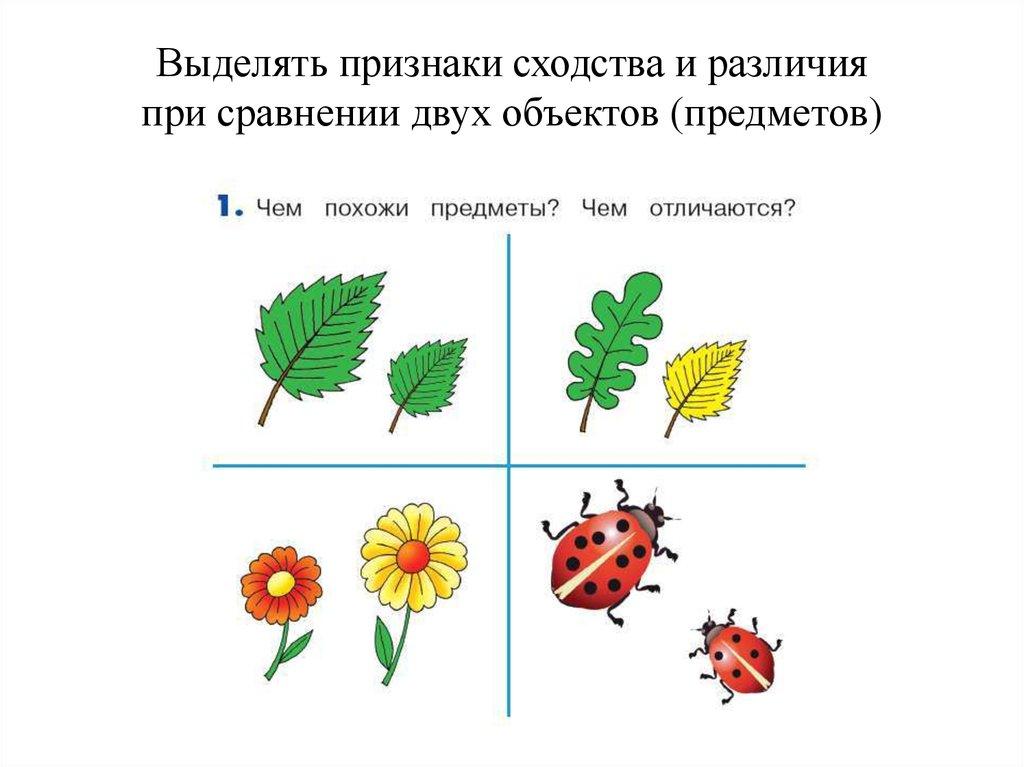 конспект занятия сравнение предметных картинок небольших