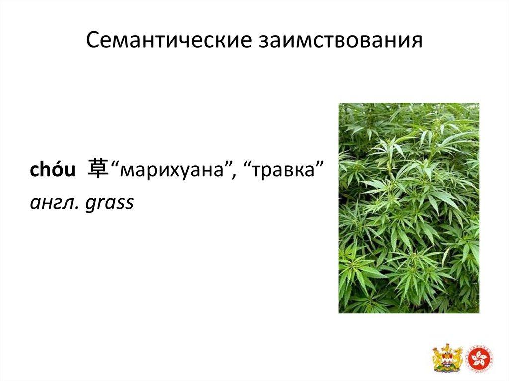 Сленг о конопле перекур марихуаны