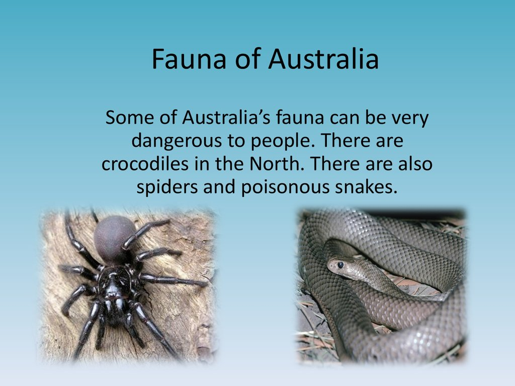 australias unique flora and fauna essay Australian landforms and their history australia's landscape is very distinctive and unique but it took many millions of years and some amazing climatic and geological processes to.