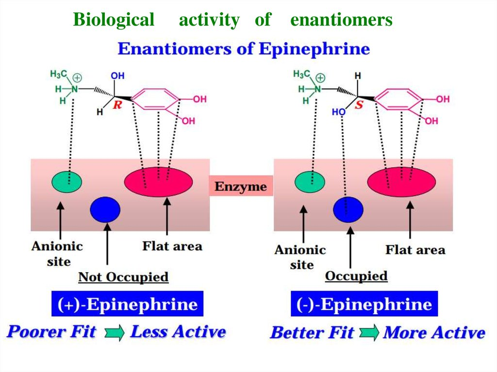 Biological activity of enantiomers