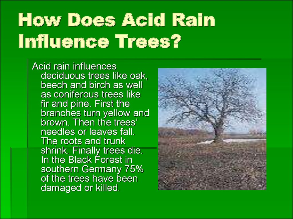 How Does Acid Rain Influence Trees?