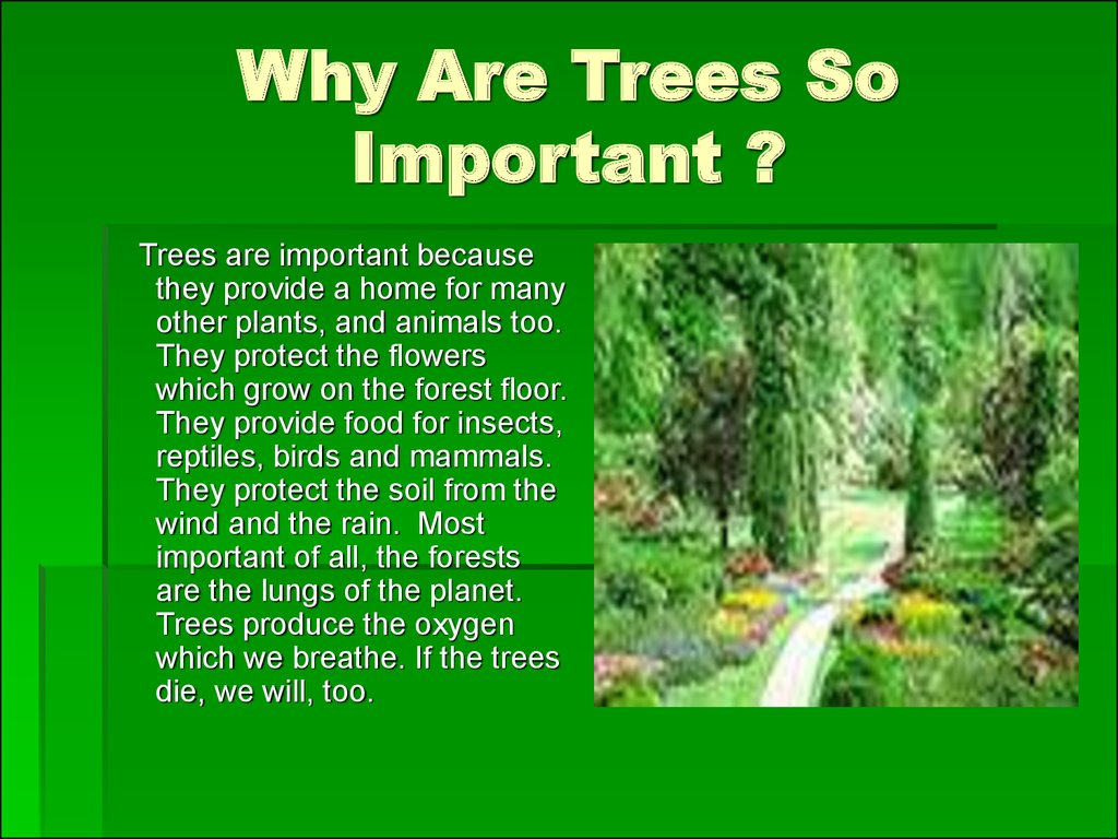Why Are Trees So Important ?