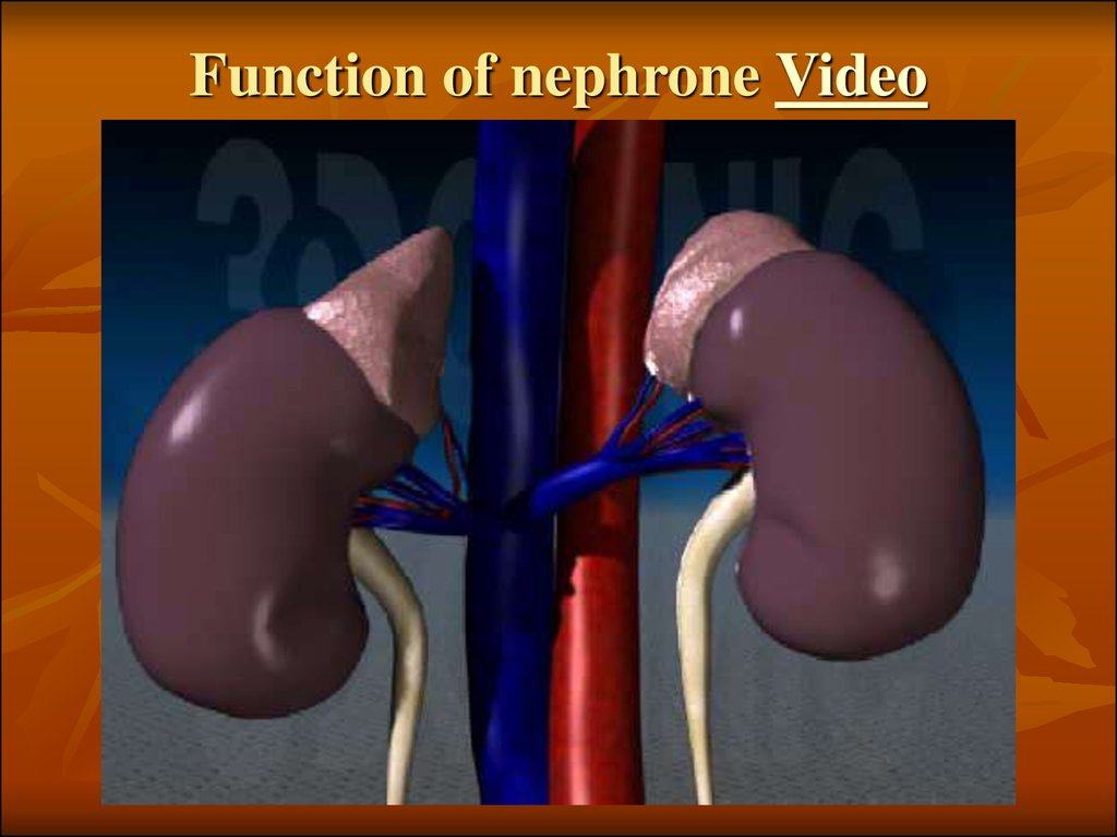 Function of nephrone Video
