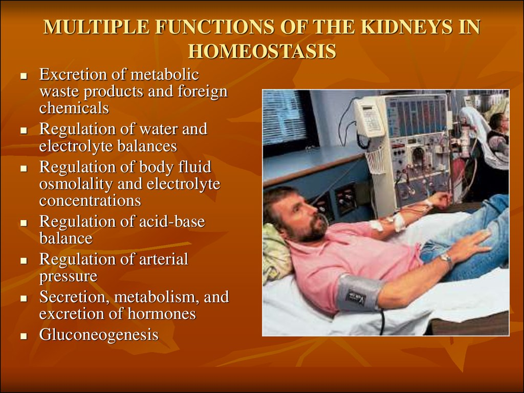 MULTIPLE FUNCTIONS OF THE KIDNEYS IN HOMEOSTASIS