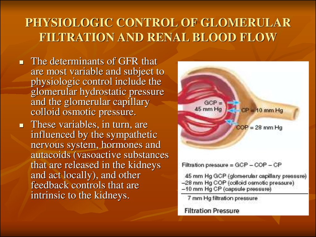 PHYSIOLOGIC CONTROL OF GLOMERULAR FILTRATION AND RENAL BLOOD FLOW