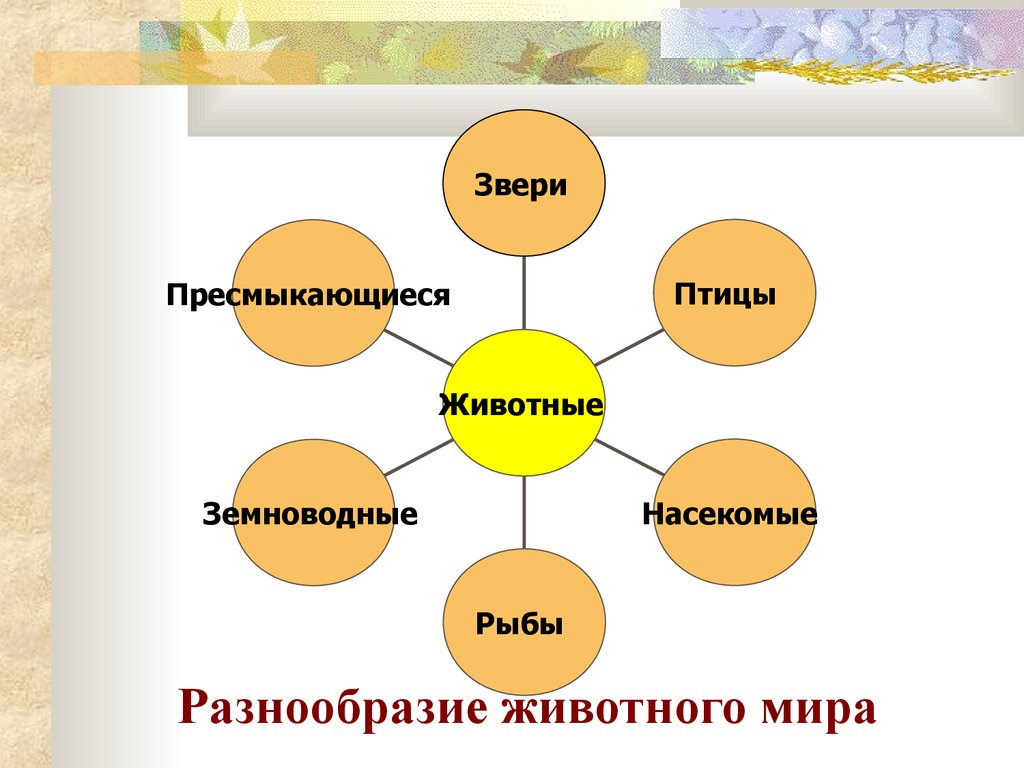 Животный Мир Беларуси Презентация