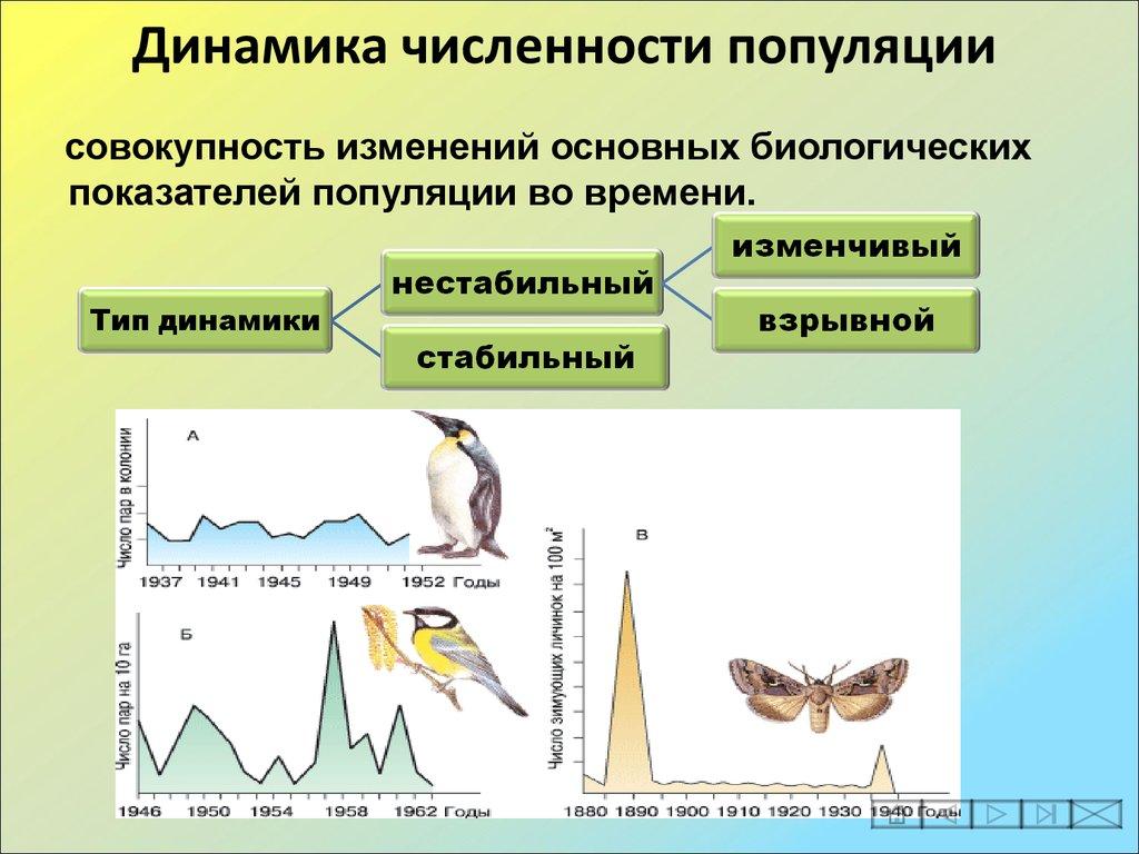 Примеры численность популяции