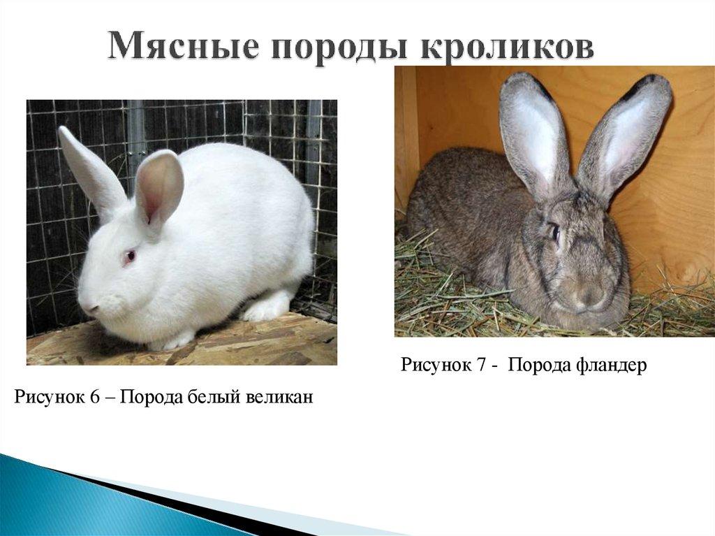 Кролики названия картинок