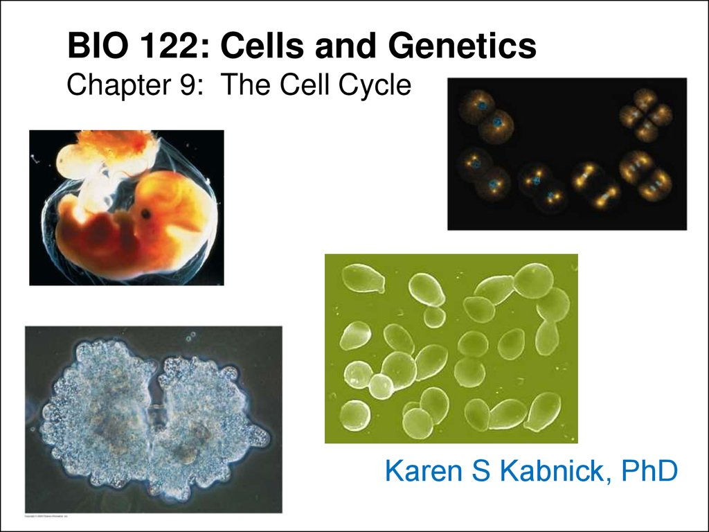 BIO 122: Cells and Genetics Chapter 9: The Cell Cycle