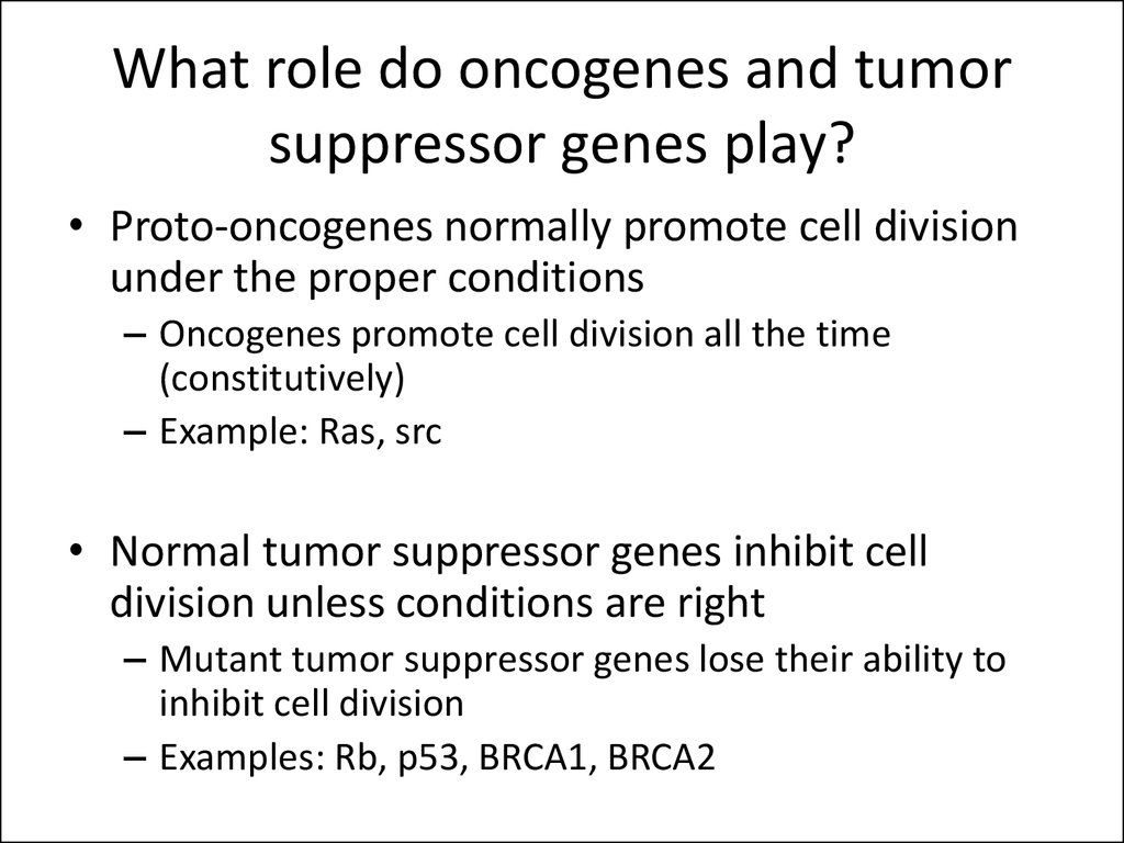 What role do oncogenes and tumor suppressor genes play?