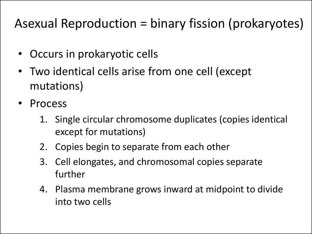 Asexual Reproduction = binary fission (prokaryotes)