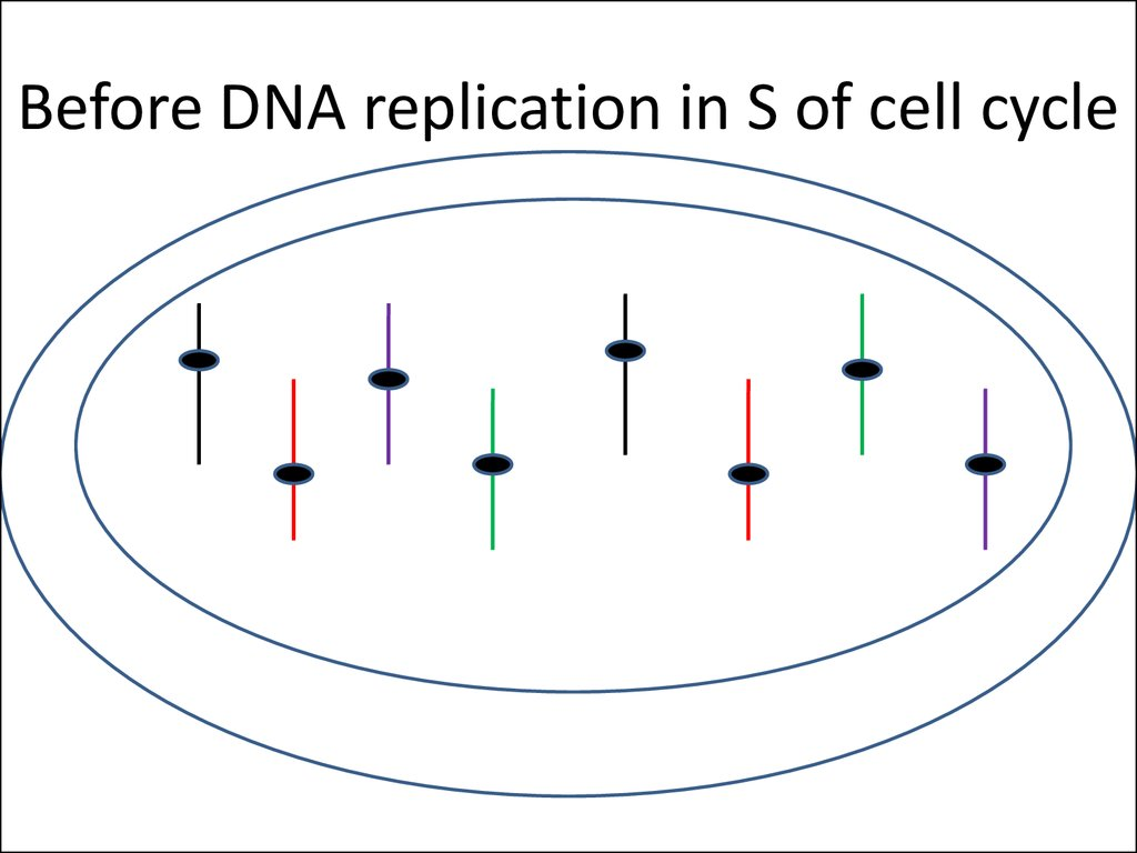 Before DNA replication in S of cell cycle