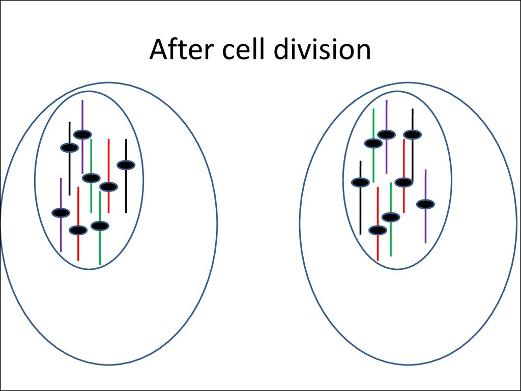 After cell division