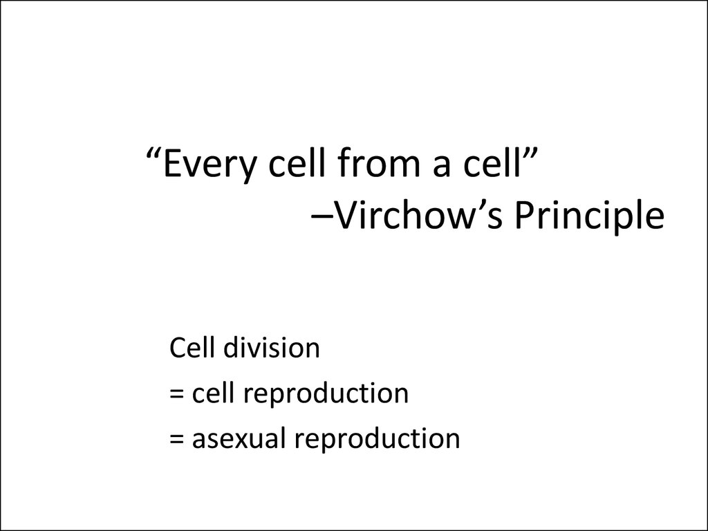 """Every cell from a cell"" –Virchow's Principle"