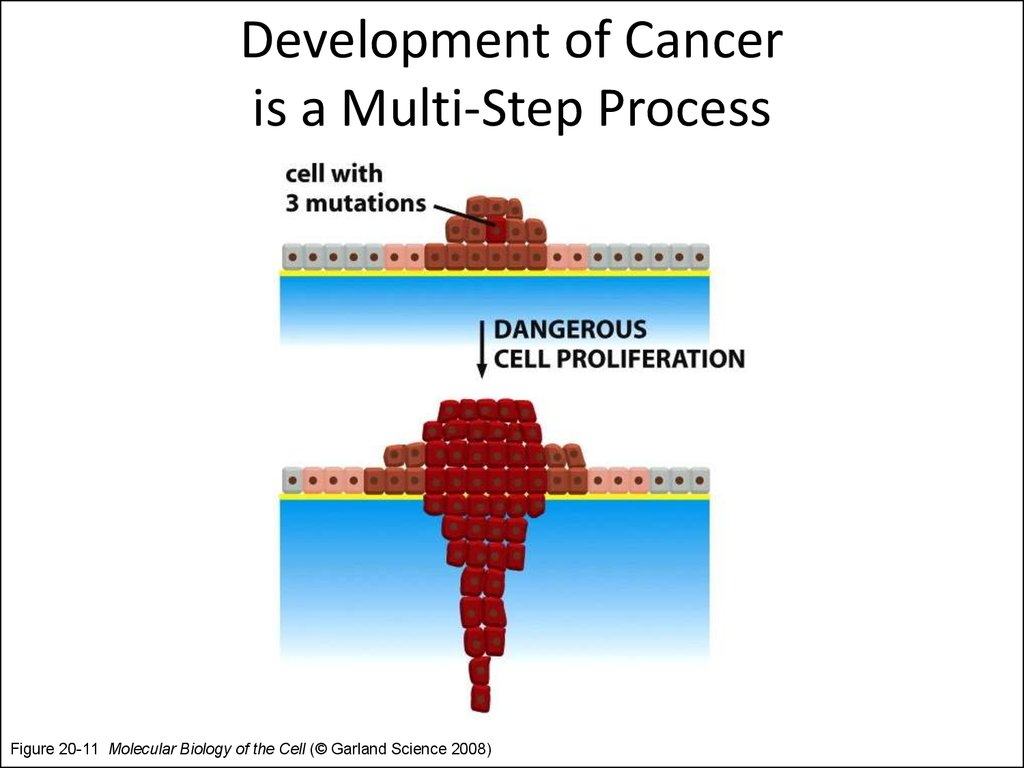 Development of Cancer is a Multi-Step Process