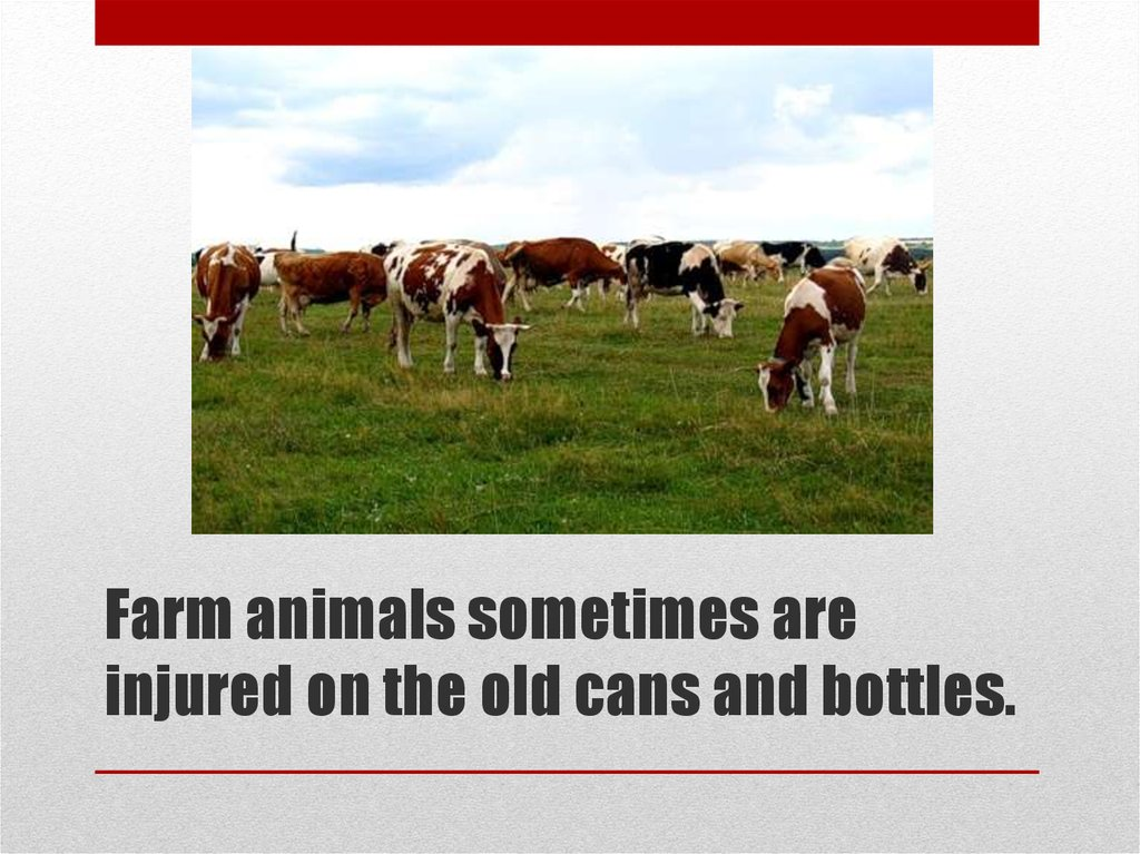 Farm animals sometimes are injured on the old cans and bottles.