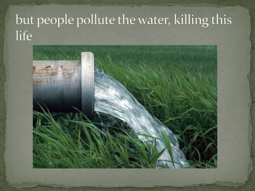 but people pollute the water, killing this life