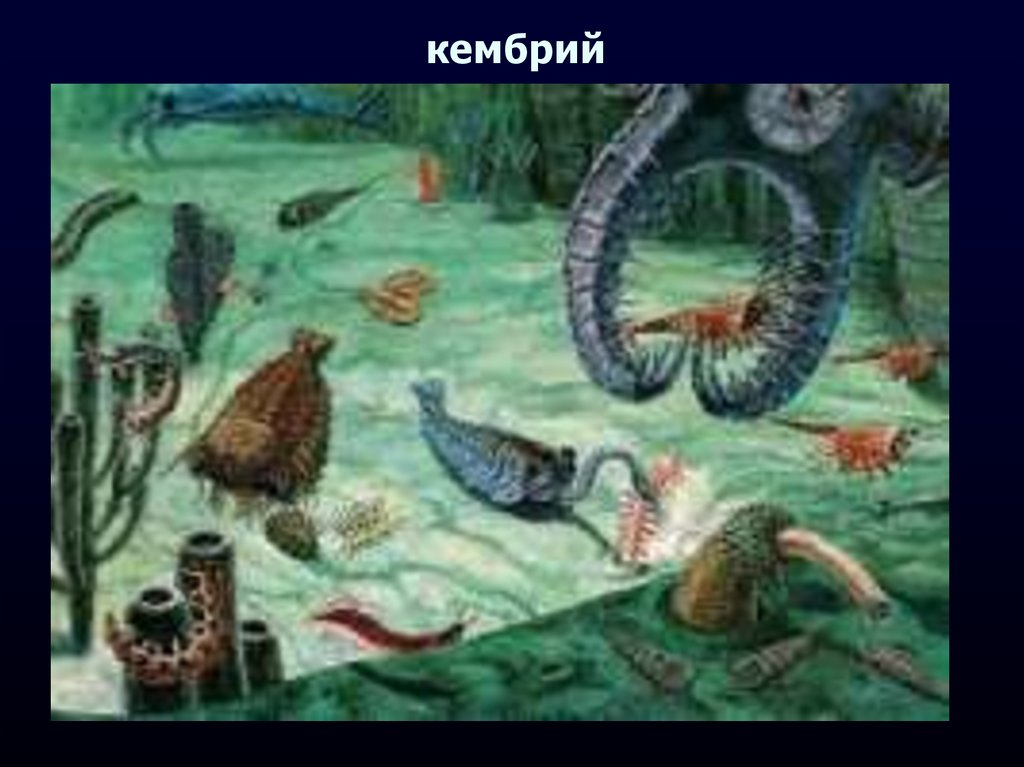 the history of the cambrian period history essay The cambrian explosion refers to the quality of the fossil record during the first 30 million years of the cambrian period (roughly 570 to 500 million years ago) during that 30-million-year period, mollusks, starfish, arthropods, worms, and chordates (including vertebrates)  evolved.