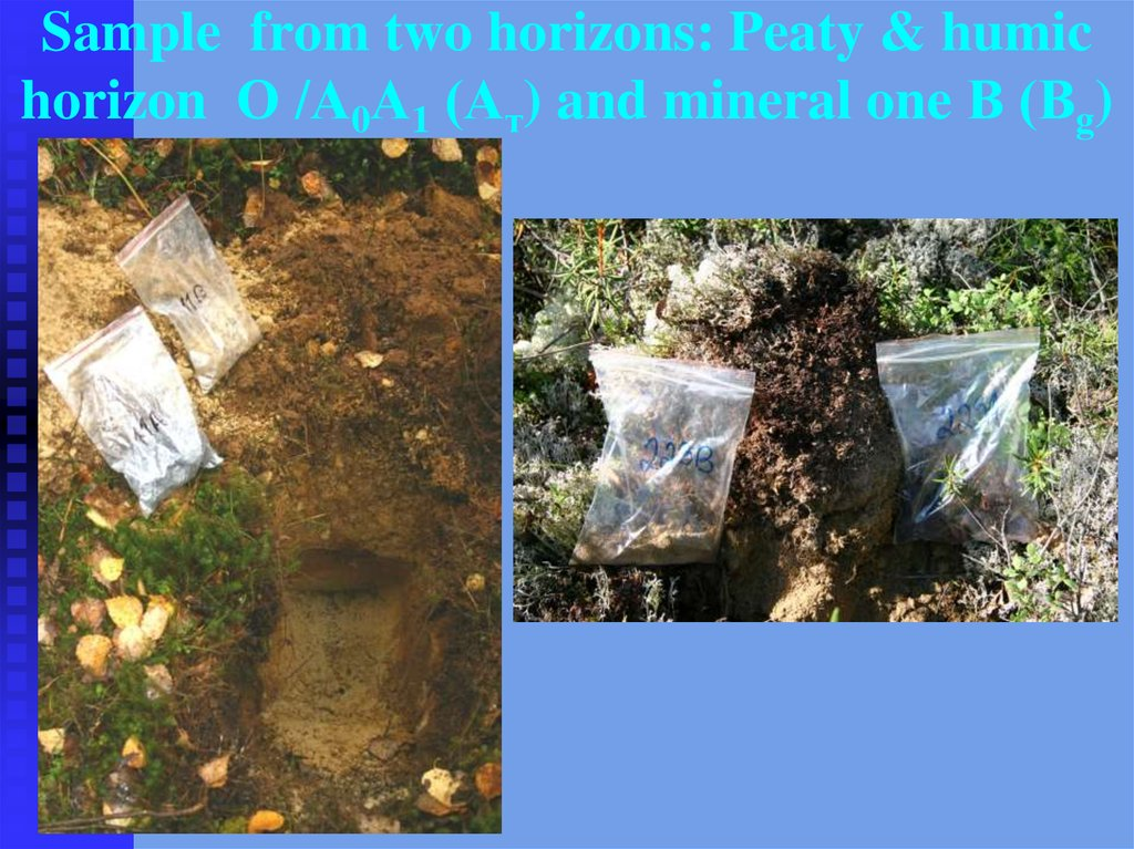 Sample from two horizons: Peaty & humic horizon О /А0А1 (Ат) and mineral one В (Вg)