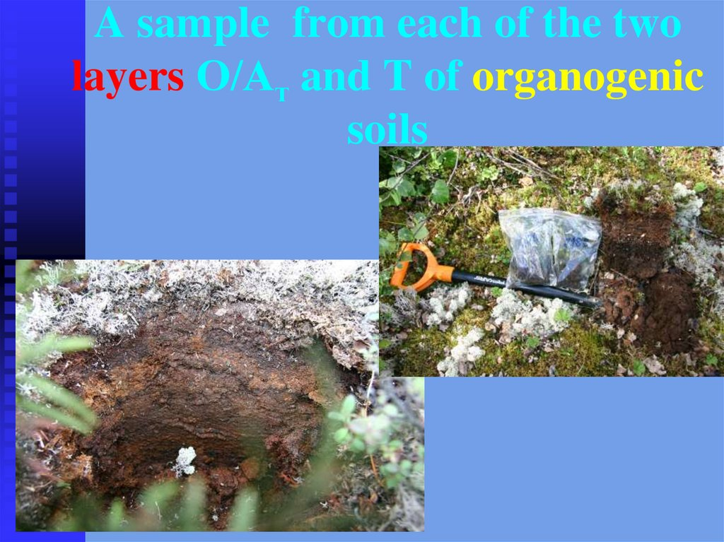 A sample from each of the two layers О/Ат and T of organogenic soils