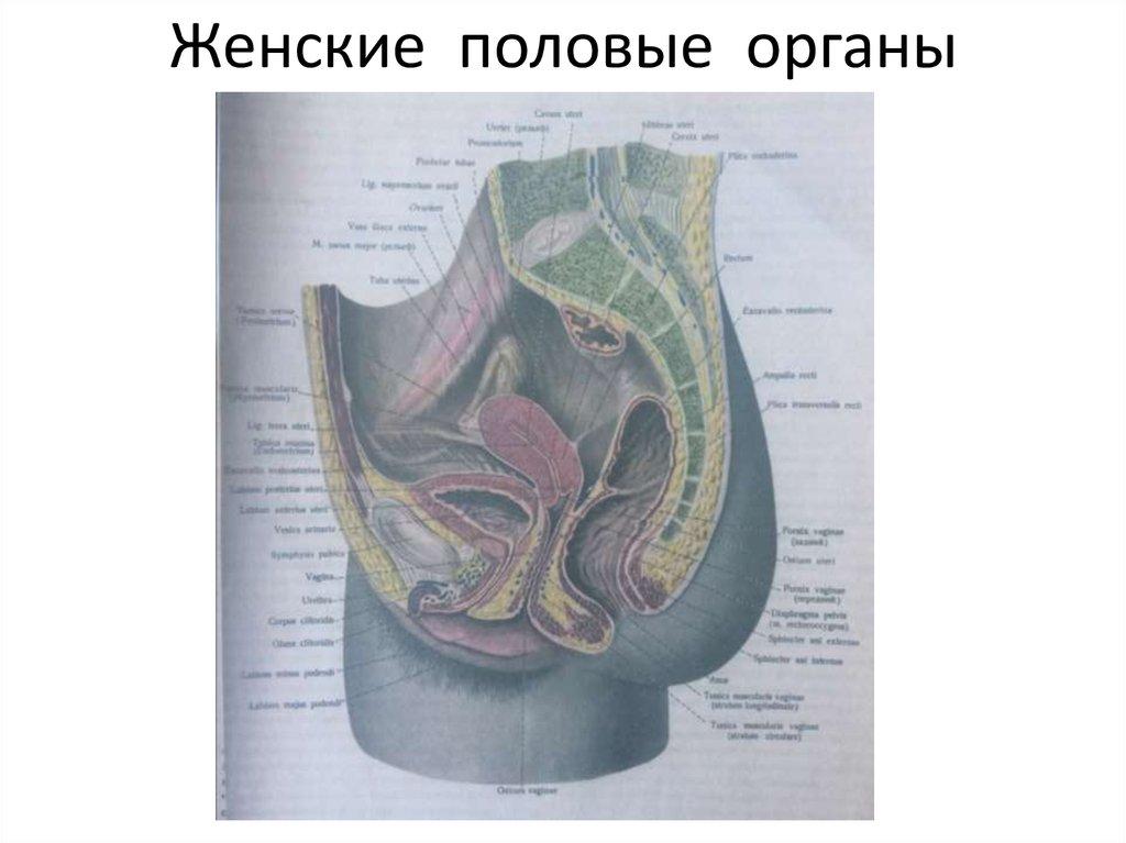 Особые женские половые органы фото, огромные сиськи подборка