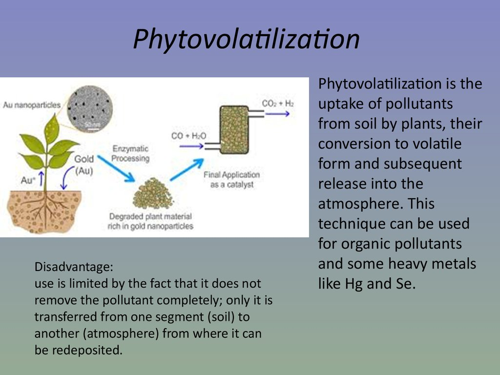 Phytoremediation Of Heavy Metals Concepts And Applications