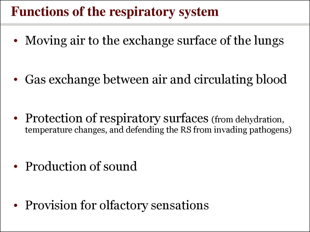 Respiratory System Power Point Online Presentation