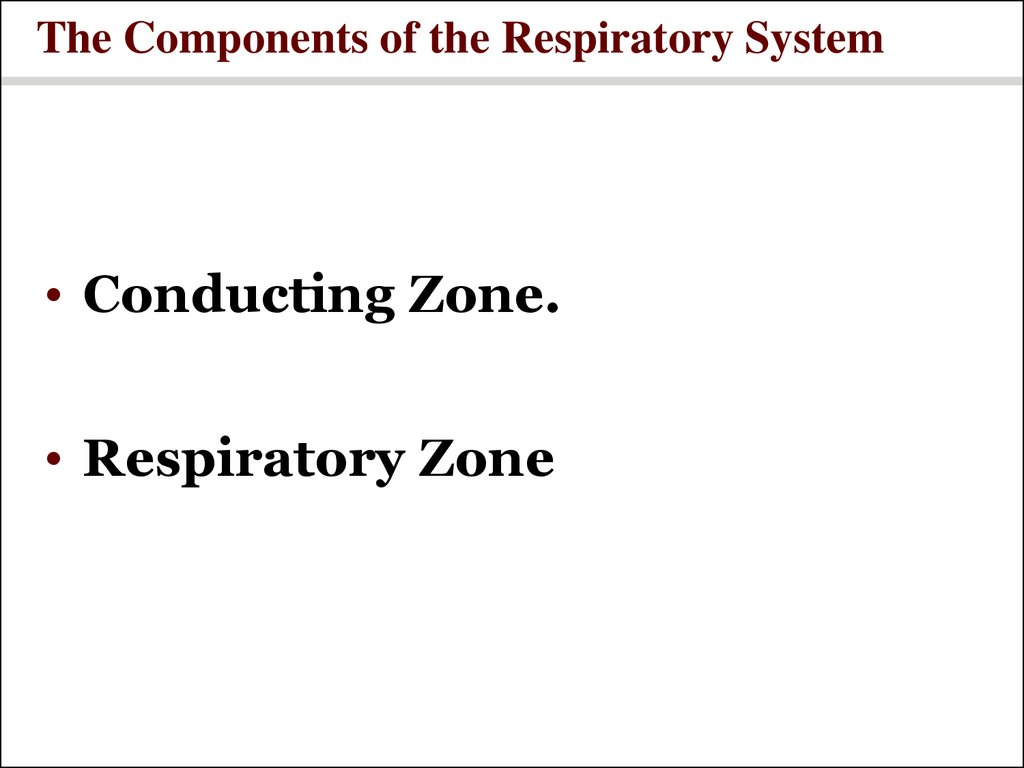 The Components of the Respiratory System