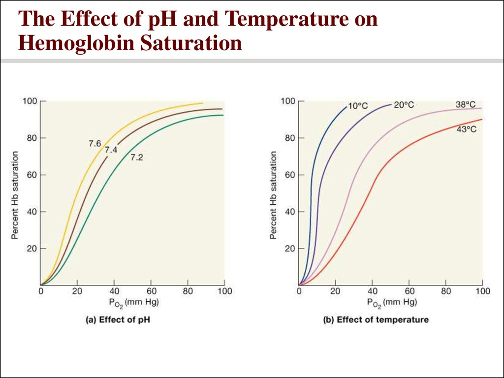 The Effect of pH and Temperature on Hemoglobin Saturation