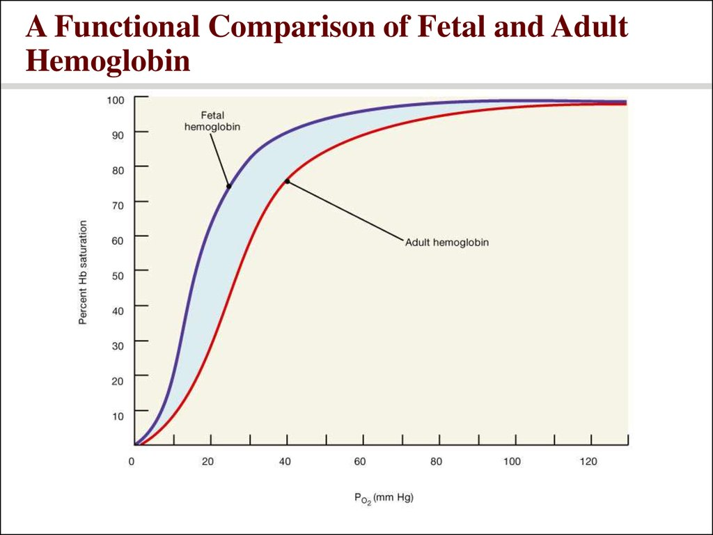 A Functional Comparison of Fetal and Adult Hemoglobin