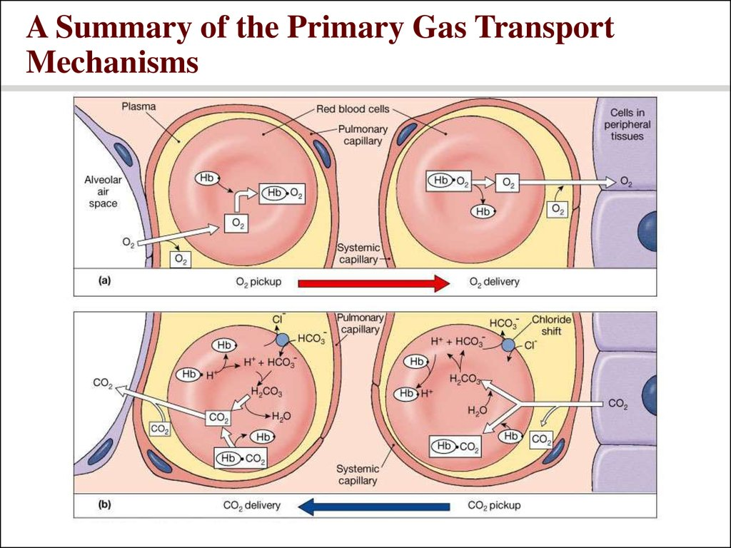 A Summary of the Primary Gas Transport Mechanisms