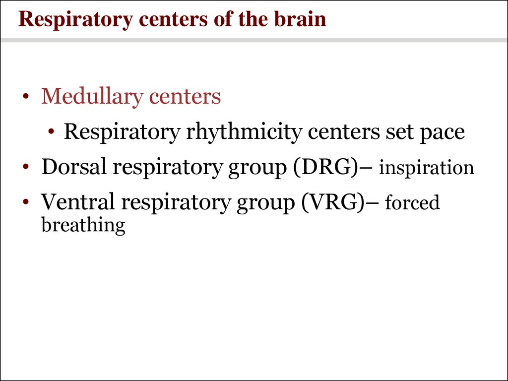 Respiratory centers of the brain