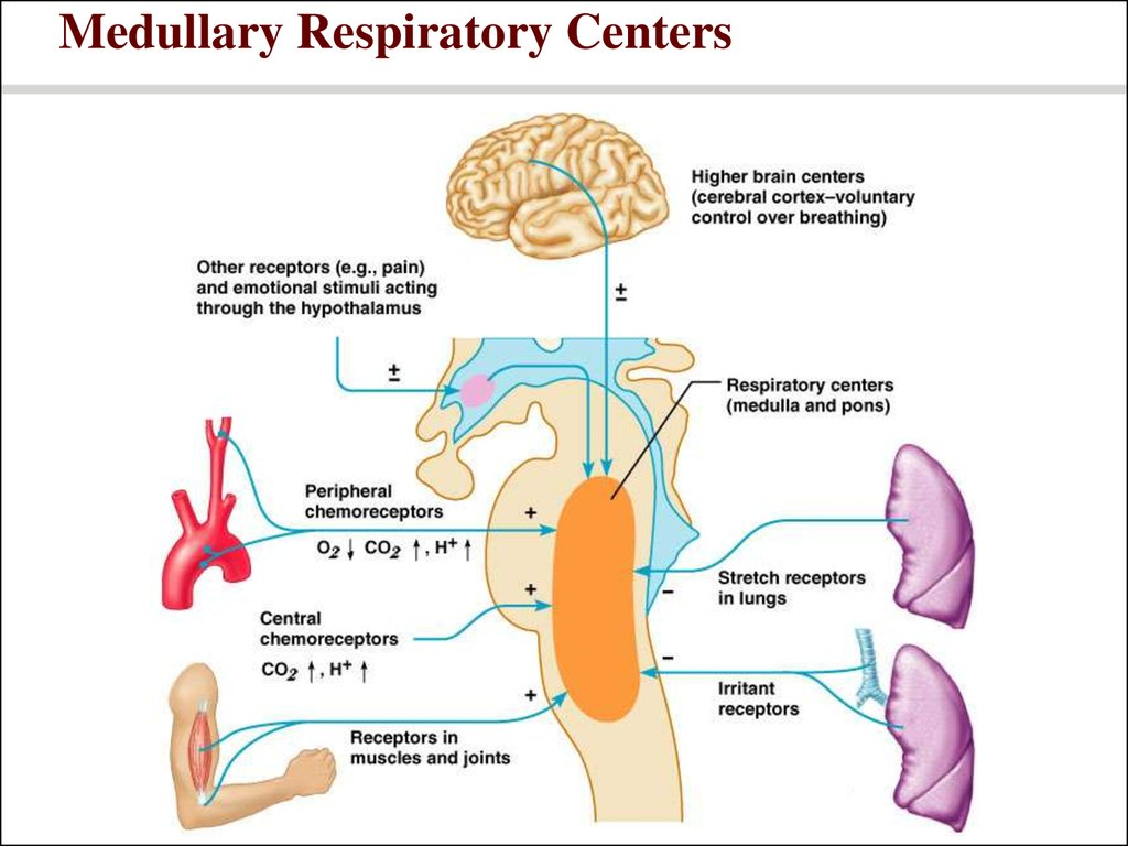 posturing to promote respiratory function essay