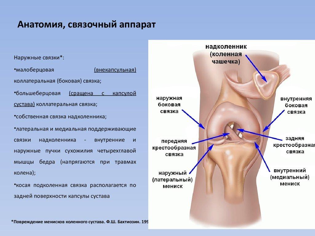 Аппарат для коленного сустава операция плечевой сустав реабилитация