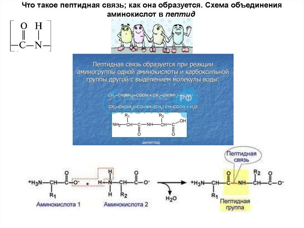 Пептиды строение свойства сколько стоят анаболические стероиды