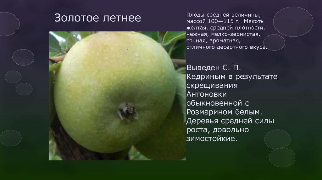 И описанием яблони мамба сорта