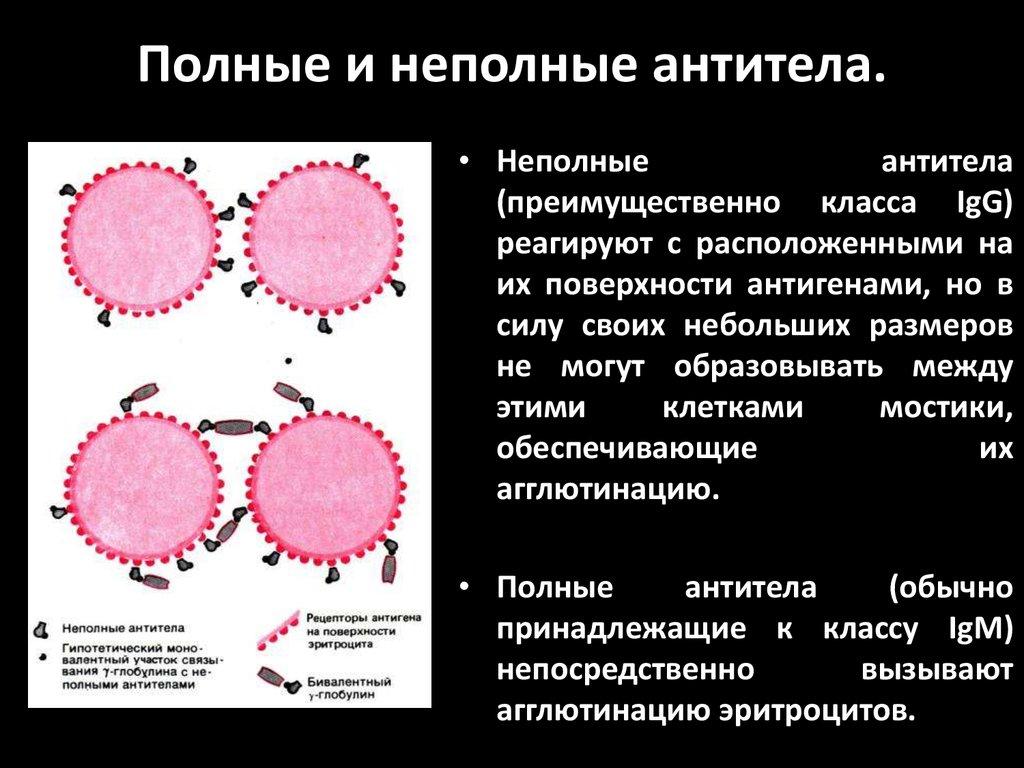 Антитела к антигену спермы считаю