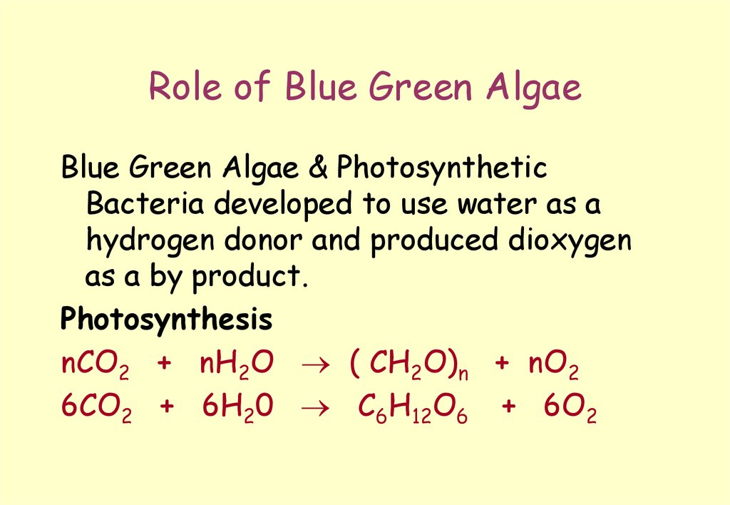 Role of Blue Green Algae