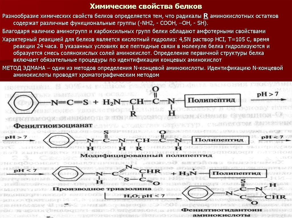 До 1 млн и более) природные полимеры, молекулы которых построены из остатков аминокислот, соединенных амидной (пептидной) связью.