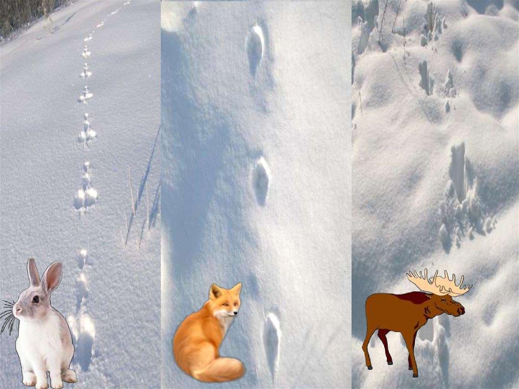 Картинка следы на снегу животных