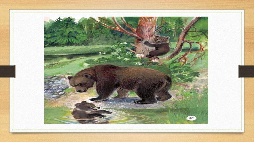 иллюстрации к рассказу в бианки купание медвежат что настоящая тобико