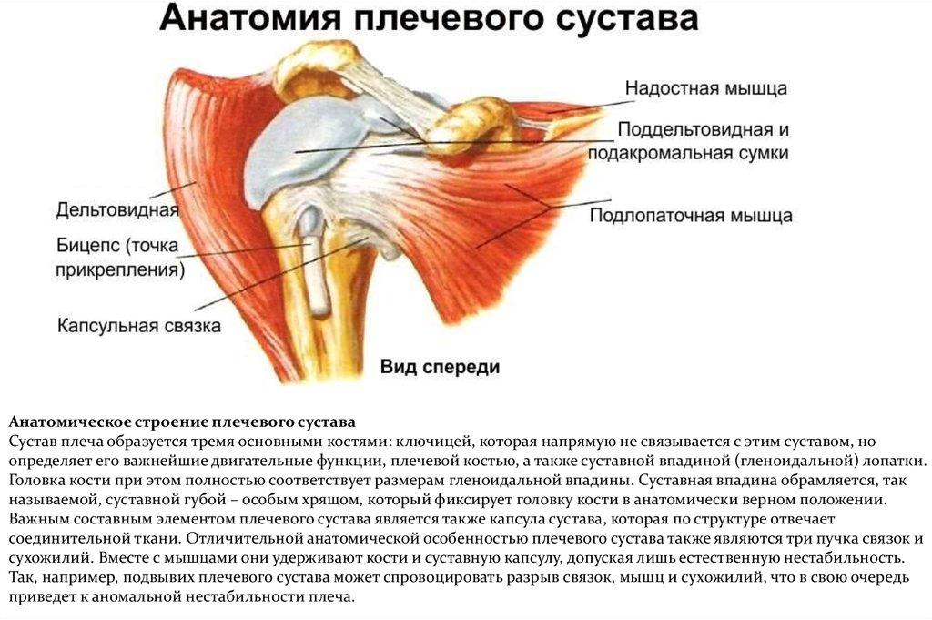 боль в суставах при нарушении эндокринной системы