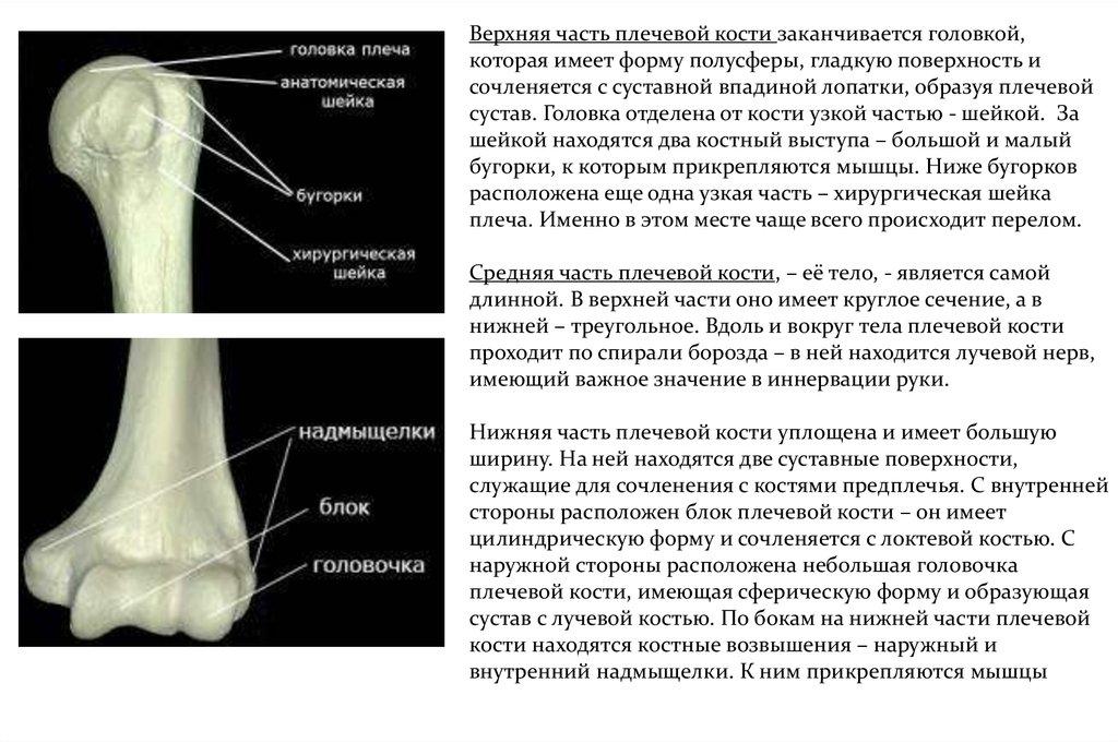 Хорошее соответствие суставной поверхности хруст в плечевом суставе с болью причины