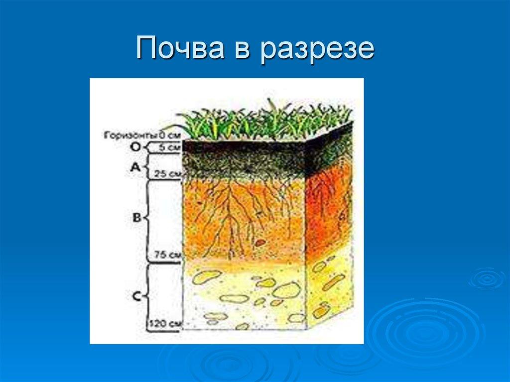 конструкция слой почвы картинки город все еще