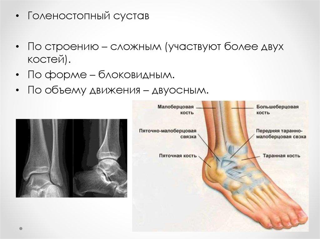 Голеностопный сустав лимфатические сосуды травмы пястно - фалангового сустава