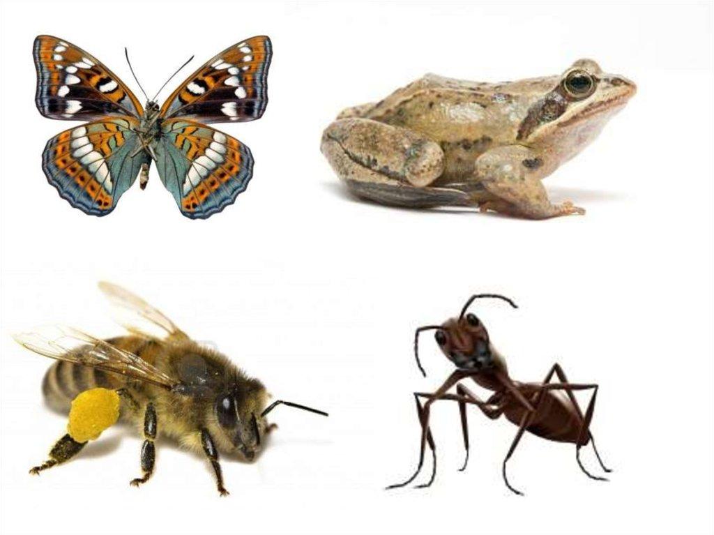 мексиканка картинка четвертый лишний насекомые гражданина основной документ